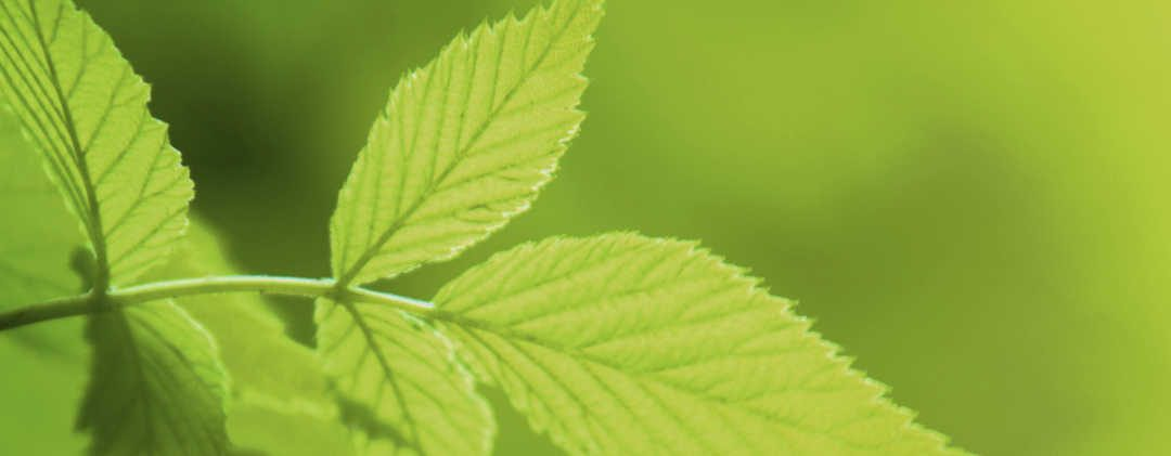 Transition écologique : non, ce n'est pas la fin des chaudières fioul !